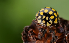 Picture black, yellow, insect