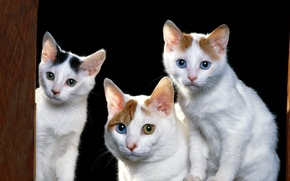 Picture animals, kittens