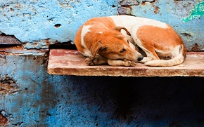 Picture Dog, Wall, Loneliness, Shop