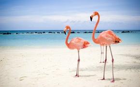 Picture sea, beach, Flamingo