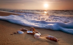 Wallpaper sand, sea, beach, shore, shell, summer, beach, sea, blue, sand, shore, paradise, starfish, seashells