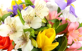 Picture flowers, tulips, white background, irises, white chrysanthemums, Alstroemeria