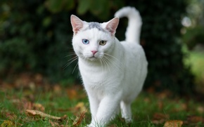 Picture cat, summer, eyes, white