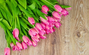 Picture flowers, tulips, fresh, pink, flowers, tulips, spring