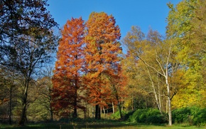 Picture autumn, forest, the sky, trees