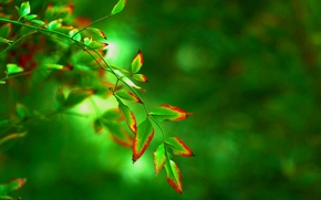 Picture leaves, macro, red, green, background, tree, widescreen, Wallpaper, blur, leaf, wallpaper, form, leaf, widescreen, background, …