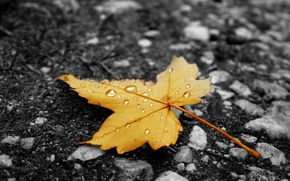Picture autumn, asphalt, sheet, droplets, yellow, rain