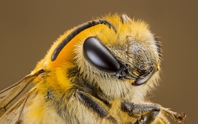 Picture macro, background, OSA, portrait, insect