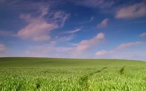 Picture field, landscape