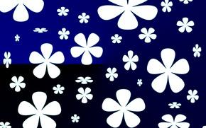 Picture flowers, texture, petals, contrast