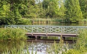 Picture trees, bridge, lake, Nature, duck, trees, bridge, lake, duck