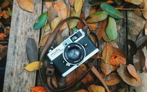 Picture autumn, leaves, the camera