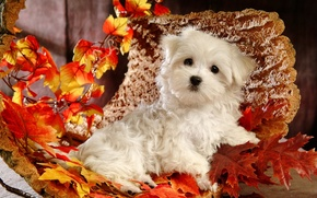 Picture dog, puppy, bark, white, autumn, leaves