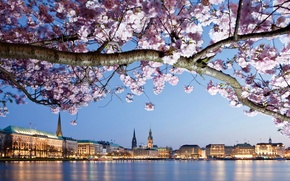 Picture river, tree, shore, home, branch, Germany, flowering, flowers, Hamburg