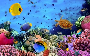 Picture fish, colorful, the bottom of the sea