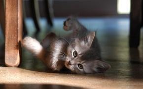 Wallpaper kitty, 157, floor