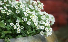 Picture flowers, pot, nature, flowers, garden