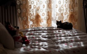 Picture cat, rays, light, comfort, house, room, mood, toys, linen, bed, pillow, lighting, window, sleeping, bed, …