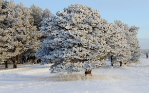 Picture winter, the sky, snow, trees, glade, day