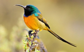 Picture bird, color, branch, beak, tail