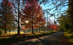 Picture road, autumn, the sky, the sun, rays, trees, sunset