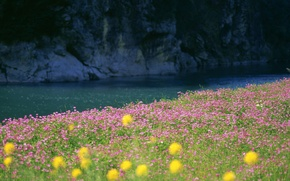 Picture field, grass, water, flowers, nature, river, photo, landscapes