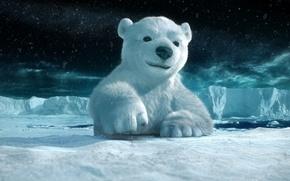 Wallpaper polar bear, snow, ice
