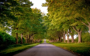 Picture road, grass, trees