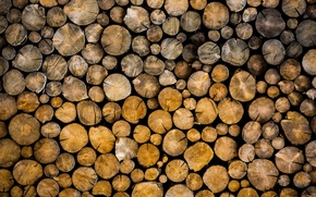 Picture forest, trees, logs, bark