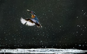 Picture lake, kingfisher, water droplets