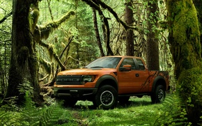 Picture greens, forest, Pickup