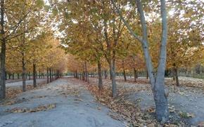 Picture iran, esfahan, isfahan, park nazhvan, Iran, Isfahan, Park nazhvan