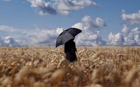 Picture field, the sky, umbrella, male, wheat field, horizon clouds