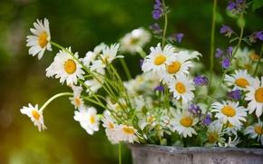 Picture summer, chamomile, bouquet