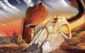 Wallpaper desert, Skull, spider