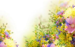 Picture flowers, field, peonies, cornflowers, Mimosa