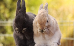 Picture nature, background, rabbits