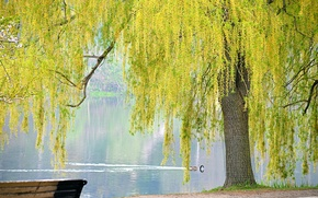 Picture pond, Park, tree, bird, spring, IVA