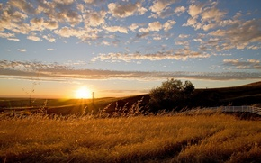 Picture field, landscape, sunset, the fence