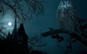 Picture Halloween, owl, castle, moon, Halloween, hounted house, the full moon, owl, night, night, dark