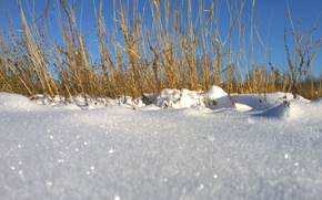Picture winter, grass, snow, nature