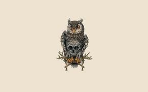 Picture owl, bird, light background, owl