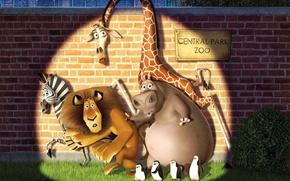 Picture animals, cartoon, Madagascar