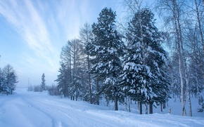 Picture Nature, Winter, Trees, Snow, Spruce