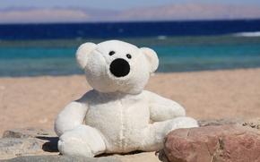 Picture sea, summer, joy, mood, shore, toy, bear
