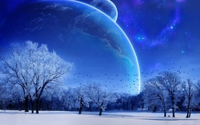 Wallpaper the moon, trees, the sky, blue, winter