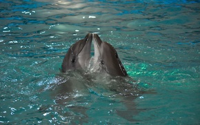 Picture animals, water, nature, pair, dolphins