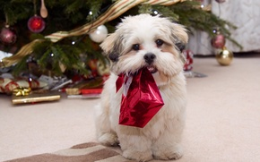 Picture winter, holiday, new year, dog, gifts, tree, gift, celebration, holiday, New year, present season