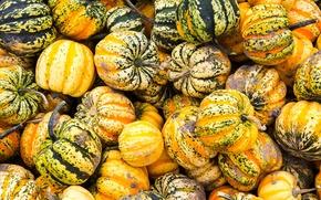 Picture autumn, paint, texture, harvest, Canada, the pumpkin festival.