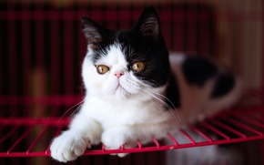 Picture cat, eyes, kitty, background, black and white, portrait, yellow, grille, pers, muzzle, cute, lies, extreme